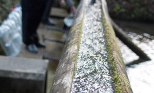 「名水100選 滝の不動尊」の湧き水