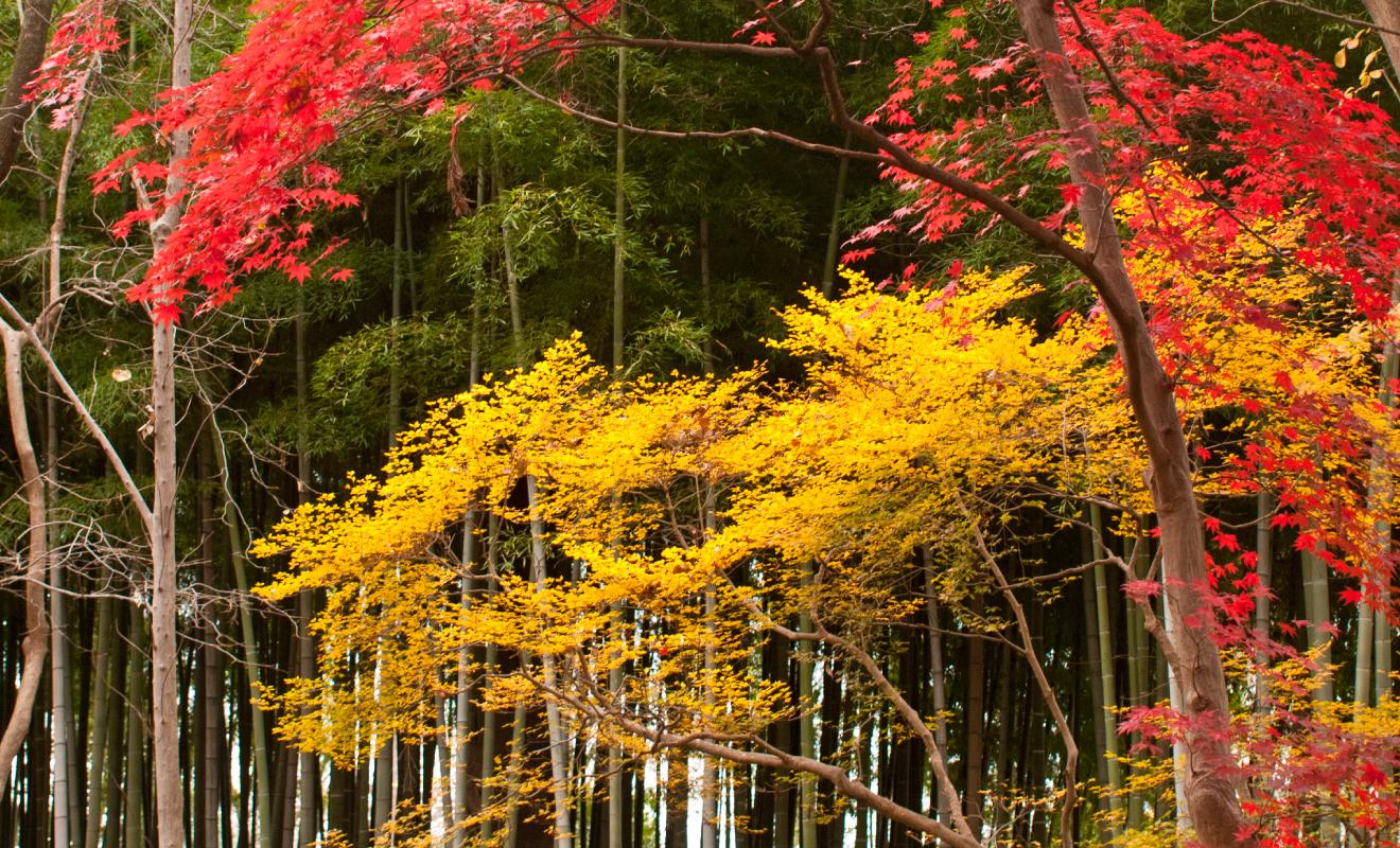 お店の近くにある芦花公園では紅葉が進んでいました。